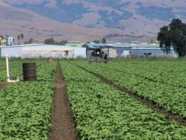 Fields in a farm