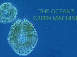 """The Oceans Green Machines"" title text with plankton in background"
