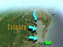 Diagram of an estuary