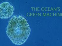 """""""The Oceans Green Machines"""" title text with plankton in background"""