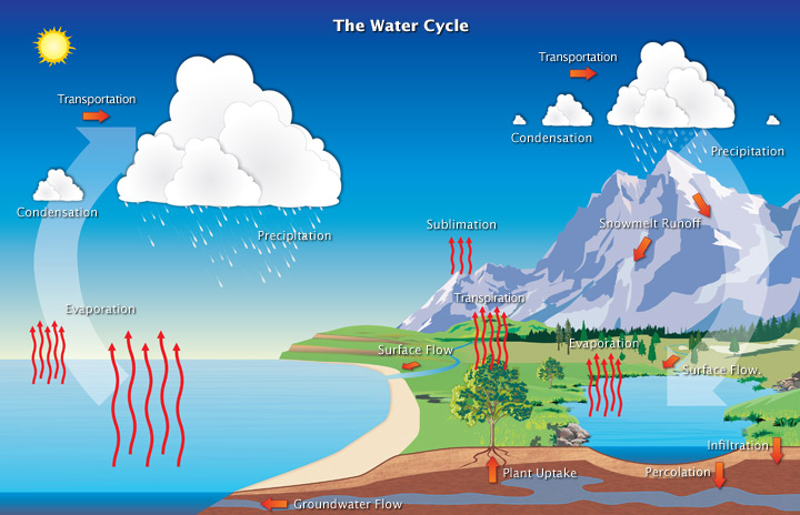 Diagram of Earth's water cycle, showing evaporation, transpiration, condensation, and preciptiation.