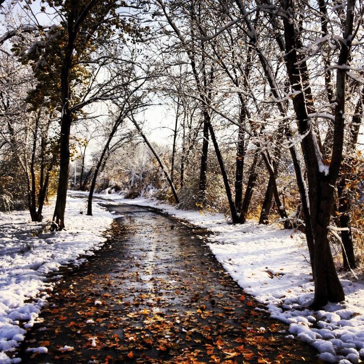 Winter Walk, by Crystal Shull