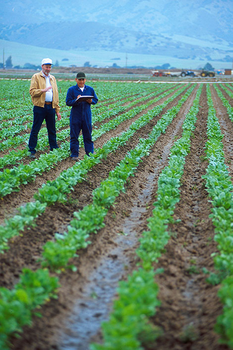 Scientists monitoring agriculture