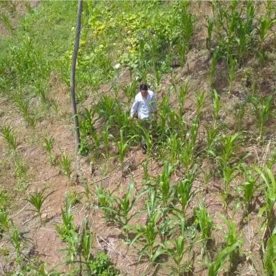 Farmer in a field in El Salvador