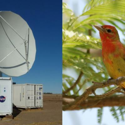 The NPOL radar and a Summer Tanger